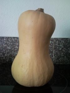 A butternut squash from the Redmond farmer's market